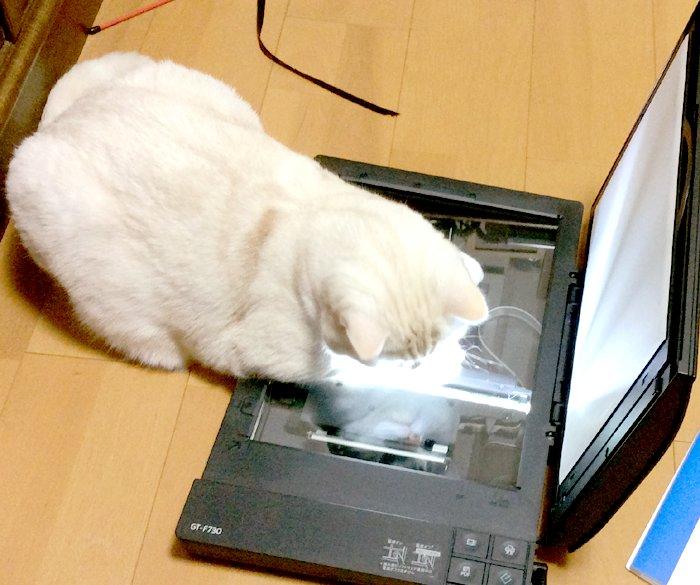 ねこ [無断転載禁止]©bbspink.comYouTube動画>9本 ->画像>1112枚