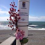 Local reaction to #EUref... Flowers on the EU flag pole on prom #Aberystwyth #ceredigion https://t.co/DEIgQmCByy