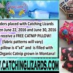 #Free 100% #Organic #Catnip #Pillow with each order through 6/30/16 #CatsOfTwitter #Cats https://t.co/MoZulcMPp0 RT! https://t.co/VTgSzkDwku