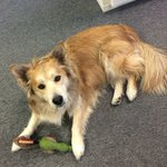 Every Friday is #TakeYourDogToWorkDay at Adster! #yeg #yegdogs https://t.co/BEEllIAaRf