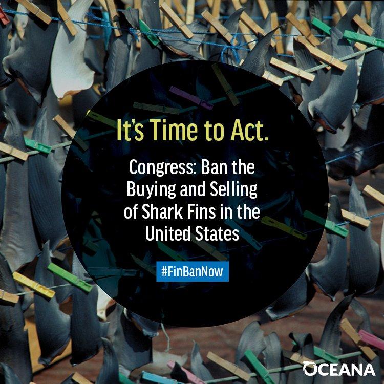 Congress introduces legislation to ban trade of shark fins in #US https://t.co/AOSGmany6v https://t.co/V4dBv8ctnf