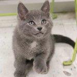 Today! AdoptAThon #Caturday in #Toronto, #Cambridge & #Waterloo! Adopt, adopt, adopt!! More: https://t.co/Ji5pBWz4fK https://t.co/HLMPoXwyMG