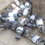 HORRORES DEL SOCIALISMO: Obreros venezolanos cazan palomas para matar el hambre -► https://t.co/ulcgXZrPwj https://t.co/6cUf1taKZx