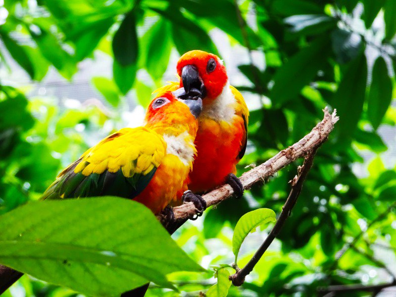 RT @travel3Sixty: Tomorrow's the last day to visit @jurongbirdpark1 to celebrate their 45th Anniversary! https://t.…