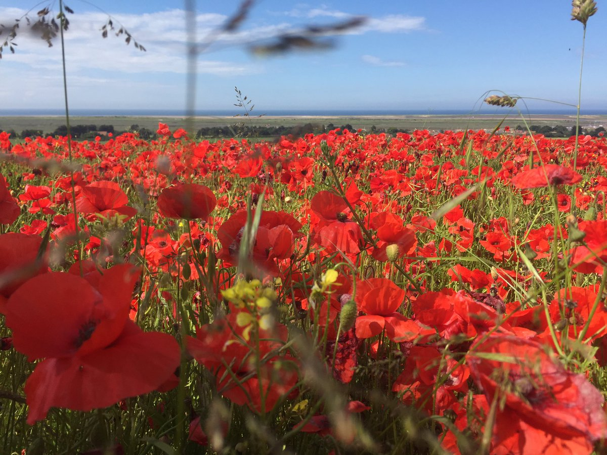 Stunning field of #poppies overlooking the #coast #northnorfolkliving https://t.co/Ud5z5Gx6Ec