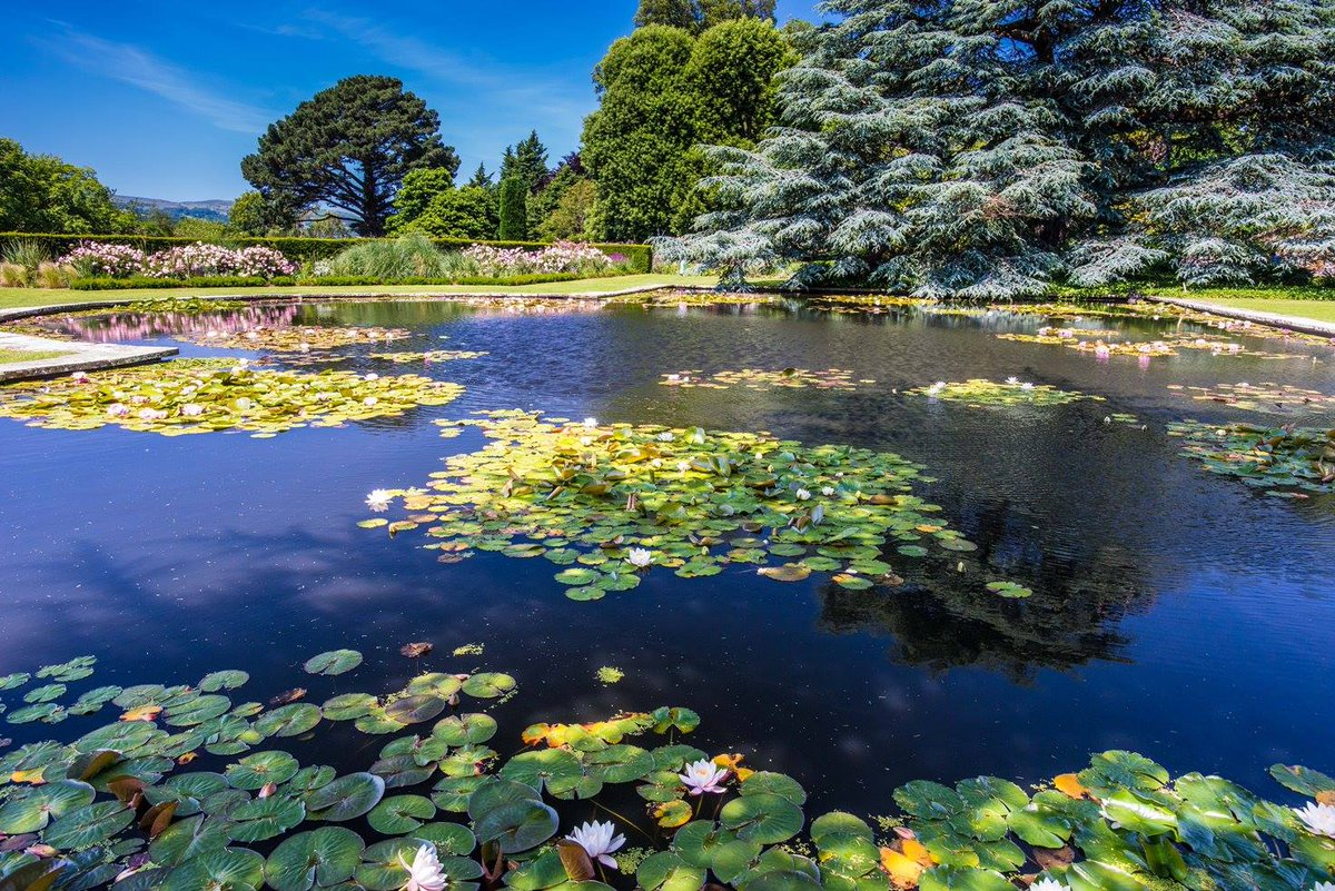 Move over Monet...the water lilies are a picture at @BodnantGardenNT this month https://t.co/Z3JrnYN0z2