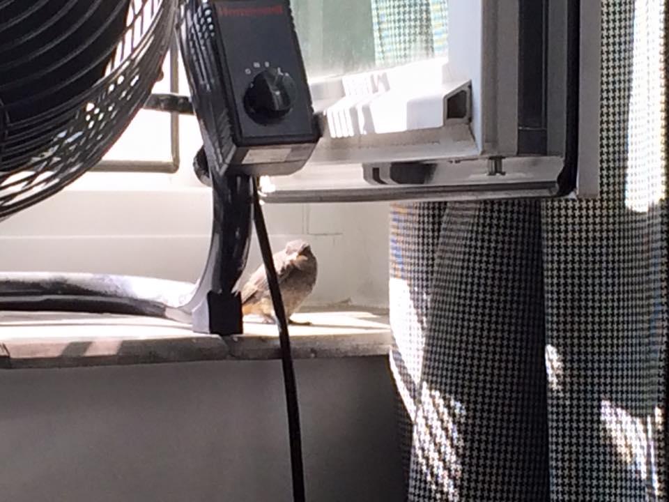 Tierischer Besuch zum Feierabend: @kanews hat jetzt (offiziell) einen Vogel! @karlsruhe  #sommerIscoming https://t.co/BY6VuMSQUw