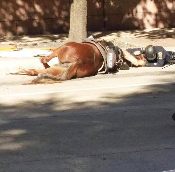 #TX cop cries over dying horse(hit by truck). Cops risk THEIR lives cuz #AllLivesMatter to them-#GodBless #DallasPD https://t.co/7wfGhfHOab