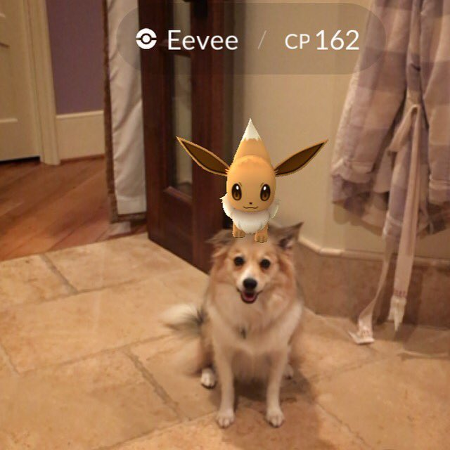Already own an Eevee... guess I'll catch another. #PokemonGO https://t.co/6MR1nJQkaR