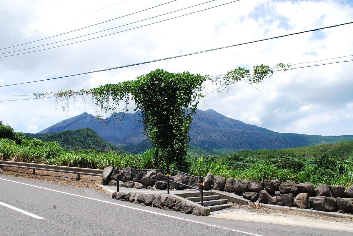 山を眺めたいなら、私を倒してから #路上園芸 https://t.co/3VfhU5sd5m