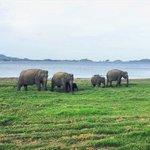South Asia Largest Gathering happens here at Minneriya National Park #SriLanka Photo @maelysalary #VisitSriLanka … https://t.co/3DpZO0Z42F