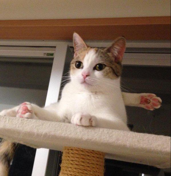 test ツイッターメディア - 心霊写真用のポーズをとってくれる猫 https://t.co/x5iYqf7Umb