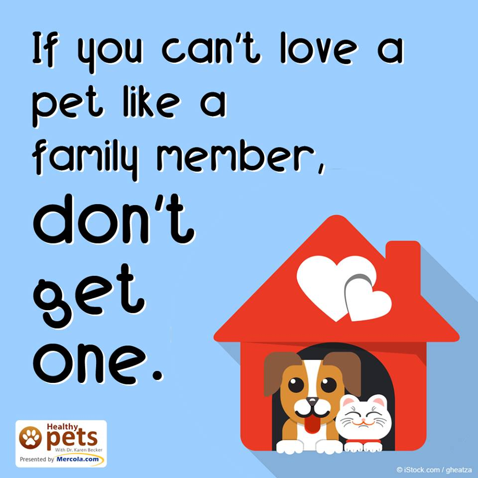 If you can't love a pet like a family member, don't get one. https://t.co/cNqjxxxSQp