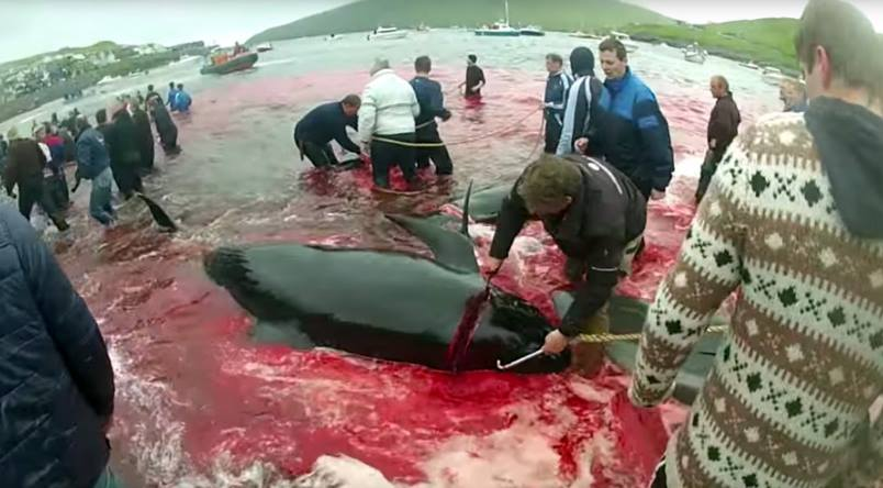 RT @SeaShepherdSSCS: Via @Care2: As Whaling Begins in the Faroe Islands, Activists Take a New Approach... https://t.co/WuvdAt8nwl https://t…