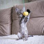 #нск #новосибирск #котята #непокупайприюти Ищем дом или передержку для котят! 2 девочки и мальчик 8-913-479-12-53 https://t.co/AJuNIykRYS