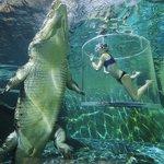 500RT:【恐怖しかない】巨大ワニと泳げるプール、その名も「死の檻」 https://t.co/NlddpvI6HY 5メートル超のクロコダイルが、ゆっくりと自分の方へ…。オーストラリアのこの観光地では、アクリル板越しにワニを… https://t.co/kQAO8LMVpJ