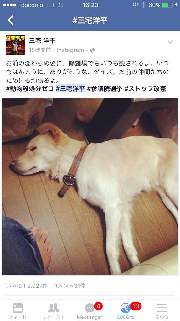 #三宅洋平 は #動物殺処分ゼロ が公約ですが、それ以上のことをやってくれると思います。基本的人権だけではなく動物など自然の権利を守ることも訴えています。彼は愛犬にロープをつけることすら抵抗あるほどの動物愛護家。殺処分ゼロは最低限! https://t.co/SzrePhHQVZ
