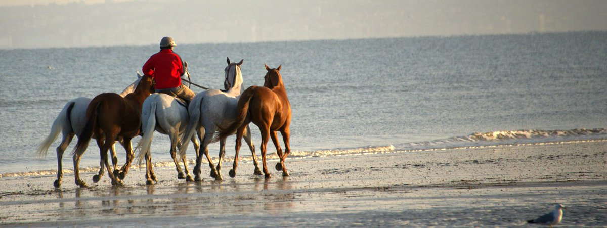 Horse around, tee off or hit the casino in Deauville! with