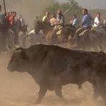 🔴 ÚLTIMA HORA  La Junta de Castilla y León deniega al Ayuntamiento de Tordesillas celebrar el Toro de la Vega. https://t.co/q0yH3qwOck