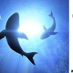 RT for a chance to #win a @SharkCleaning Rotator Lift Vac! Winner drawn on 6/29. #NFMSharkWeek #SharkWeek https://t.co/vDuBWk92Zn