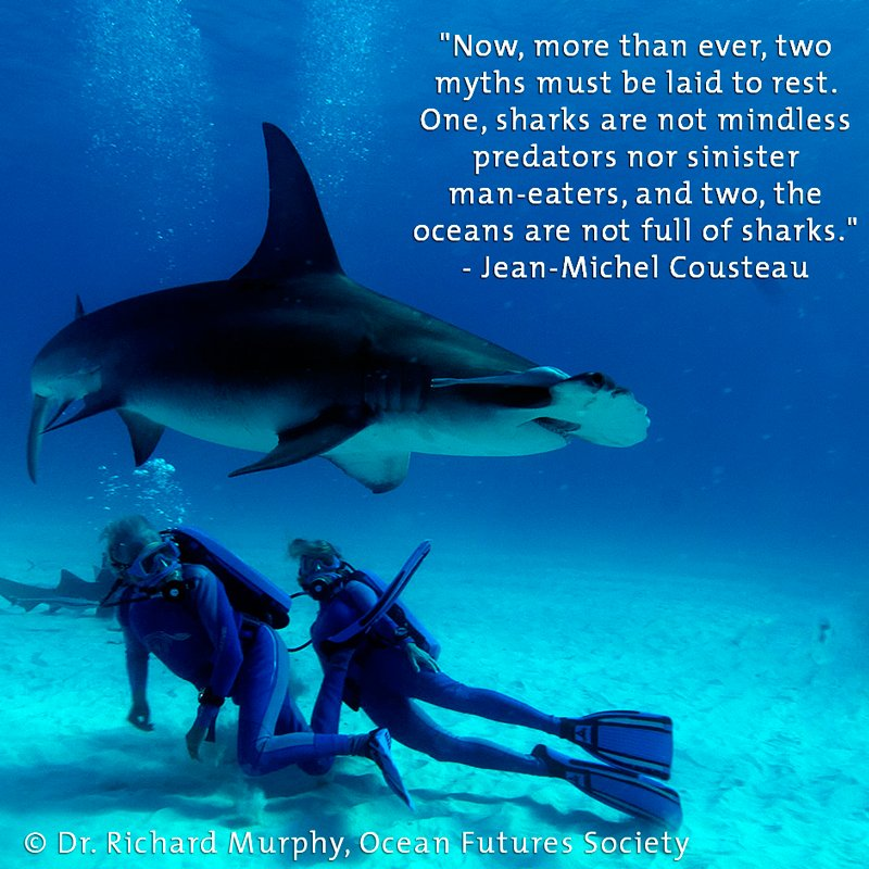 """Sharks r not mindless predators nor sinister man-eaters, & the oceans r not full of sharks."" #SharkWeek2016 https://t.co/JmdU76LKSu"