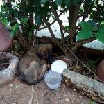 *AVISO* Cachorro herido en Retorno de Los Venados #811 Lomas de Lourdes #Saltillo 11:18 @lucagaca84 @MVZSALAS https://t.co/Vw35KU0UVL
