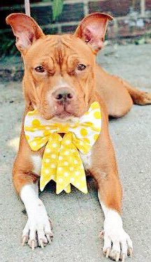 MOMMY JOY IN LINE TO KILL ROOM @NYCACC #NYC   DIES VIA LETHAL INJECTION SANS ANESTHESIA!