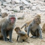 Monkeys infected with Zika provide valuable insights into the virus https://t.co/VTmb7fEthm https://t.co/2yP2BzgaMp