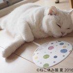 【天国ニャ】「ねこ休み展 夏 2016」浅草橋で開催! 人気の猫クリエイター集結 https://t.co/qY6ME6DPfm SNSで人気の有名猫も数多く登場する。日本橋タカシマヤでは「ねこ休み展 総集編」を同時開催! https://t.co/mMiKyshGOL