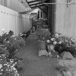 『路地裏に咲く花々』#写真撮ってる人と繋がりたい#写真好きな人と繋がりたい#ファインダー越しの私の世界#写真 #カメラ