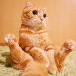 「ねこ休み展 夏 2016」浅草橋で開催 - SNS界のスター猫の写真展、日本橋高島屋で総集編も https://t.co/azqIVb9iYH https://t.co/kGpA3FY0iv