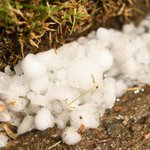 Got hail damage in your garden from yesterdays Denver storm? Heres how to fix that: https://t.co/DRJyp0lPPl https://t.co/8csvkgTsXg