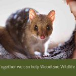 New Field Notes e-news for @MulligansFlat & @JerraWetlands https://t.co/kYwIvXCi6H #wildoz #CBR #EOFY https://t.co/VN14yiceY9