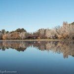 Winter Mirror #BowenPark #Canberra #Winter https://t.co/dPyyFntC2b