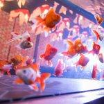[レポート]すみだ水族館の夏イベント「お江戸の金魚ワンダーランド」千匹の金魚が舞う全長100mの新展示も https://t.co/cXHw6SA8YZ https://t.co/2Quh7oeUpV