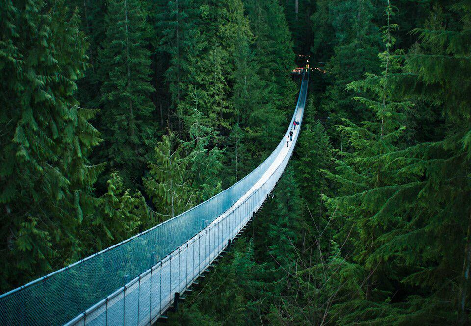Suspension Bridge In Canada's Forest | Photography by ©Michell Erlee https://t.co/iWDSXrEckV