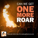 Less than 24 hours to give #OneMoreRoar back to #PrincetonU! https://t.co/P1xiZf6c71 https://t.co/hyCushGRak