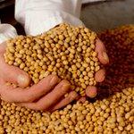 Pdte. @NicolasMaduro insta a la producción agroecológica para abastecimiento de semillas https://t.co/KrowTiAmg2 https://t.co/DnJQEsjRSH