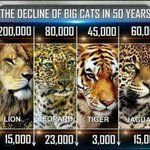 Just seen this. ???? #TheWomenWhoKillLions RT if u agree that TrophyHunting must be banned across the world! ???? #SpeakUp https://t.co/zL4luWEffK
