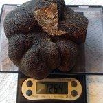 This big beauty arrived in the #amisfieldkitchen yesterday, black Perigord truffle from #blacktrufflesdownunder #nz https://t.co/NFu0n5a5gZ