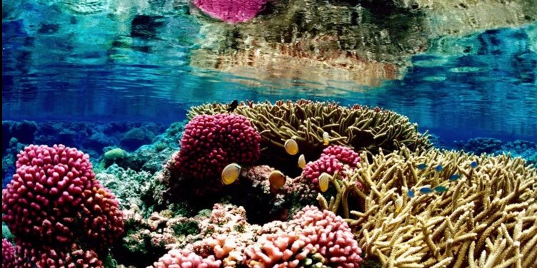 The World's Most Beautiful Coral Reefs You Must See Before You Die