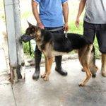 Estudiantes de ULA denunciaron las condiciones en las que se encuentra la brigada canina https://t.co/Ofqmg4Dmi9 https://t.co/zr5wP6FZv4