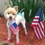 "From tonights ""Report It"" inbox.  This is ""Coco"" ""Groomed and dyed, ready for the 4th of July""  @WTNH https://t.co/oTrVClRUgE"