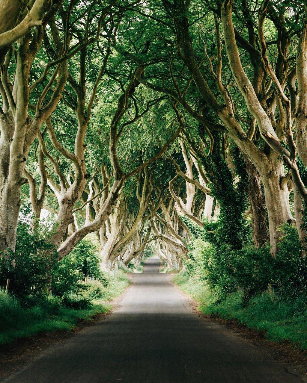The Dark Hedges, County Antrim, Northern Ireland | Photography by ©@tannerwendell https://t.co/gsovgQ5LTk
