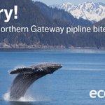 Victory!! Enbridges Northern Gateway pipeline bites the dust! Read our response: https://t.co/SeTHFPkf0N https://t.co/1Z8oSZa02j