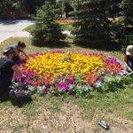 Высаженные в рамках муниципального контракта цветы содержатся в надлежащем состоянии. @Rudakov_i_a @DepGorHozSamara https://t.co/hlV43cRwm0