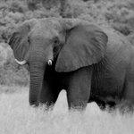 The town where elephants roam free, Kasane Botswana https://t.co/xkv38j1x8g https://t.co/hHzmNOXPOD