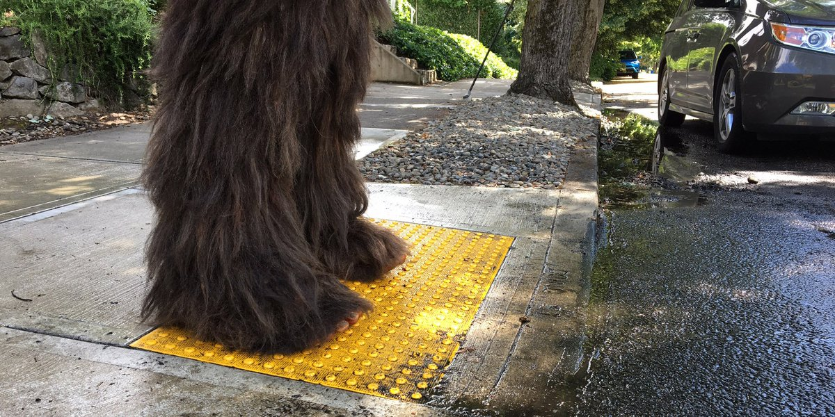Did you know all Oregon intersections are crosswalks? Watch for more from this guy soon... https://t.co/z80yfb8P1u https://t.co/7YQNCcnrku