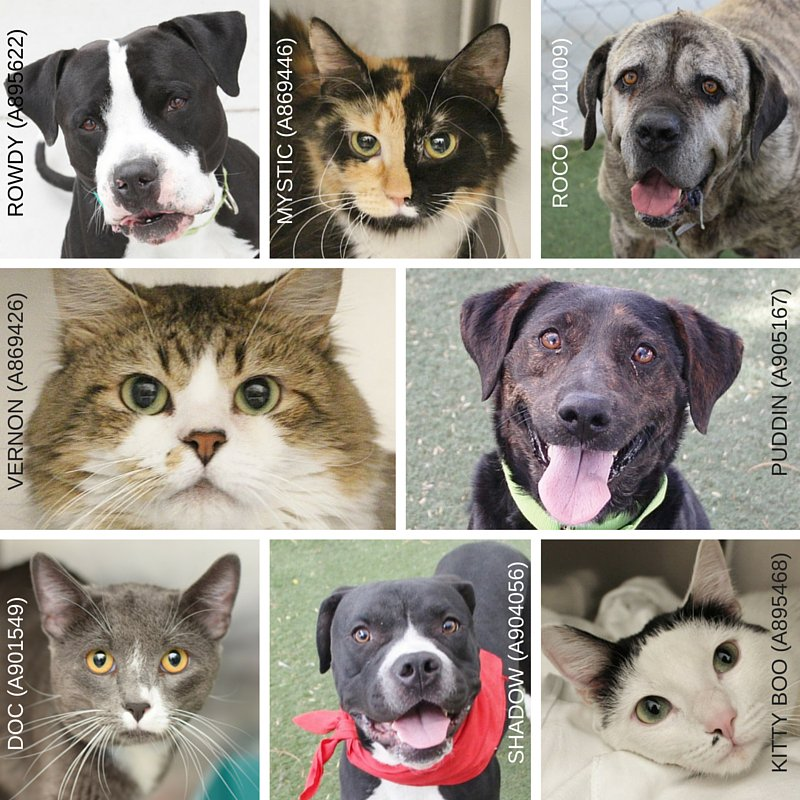 #Breaking #Vegas @animalfndlv is at capacity! #Adopt a furry friend and save a life. https://t.co/IXT2A0yF6D