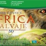 Inicia el mes de julio y eso significa película 3D nueva: #AfricaSalvaje de @BBCEarth ¡Te fascinará! #SLP https://t.co/ThOsmDydgX
